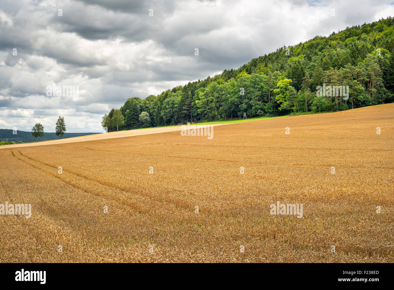 Image of a wheatfield in Franconia, Germany - Stock Image