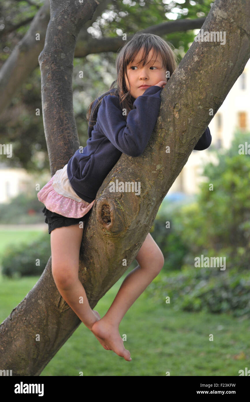 5 year old girl  in a tree Brighton, England. Model Released. - Stock Image