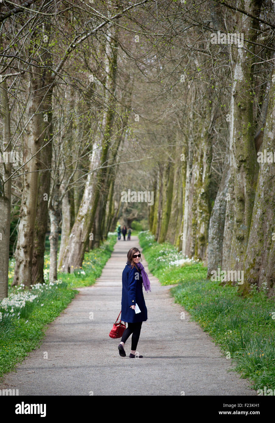 Woman standing on a path flanked with tall trees. Devon, England - Stock Image