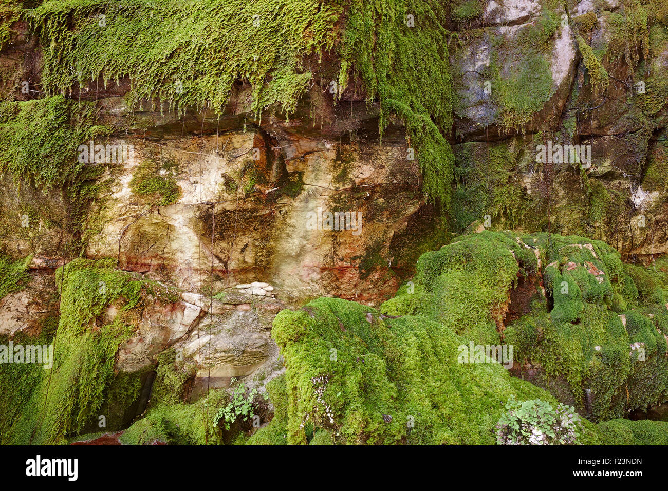 Moss grows on sandstone cliffs in a sheltered area of the Carnarvon Gorge. SE Queensland, Australia - Stock Image