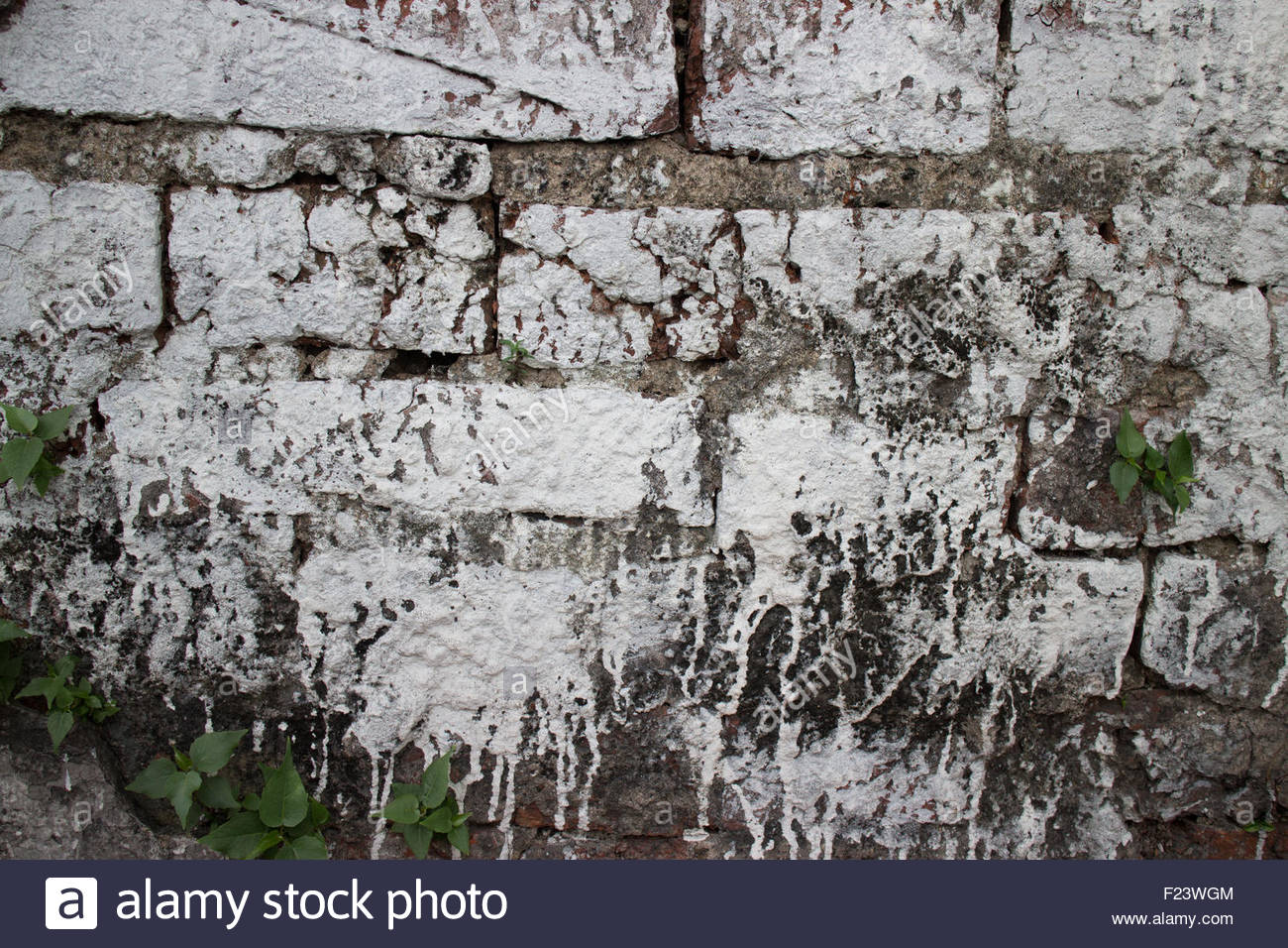 medium close up of an old brick wall at a former prison in Asia hastily and  sloppily painted with whitewash paint. - Stock Image