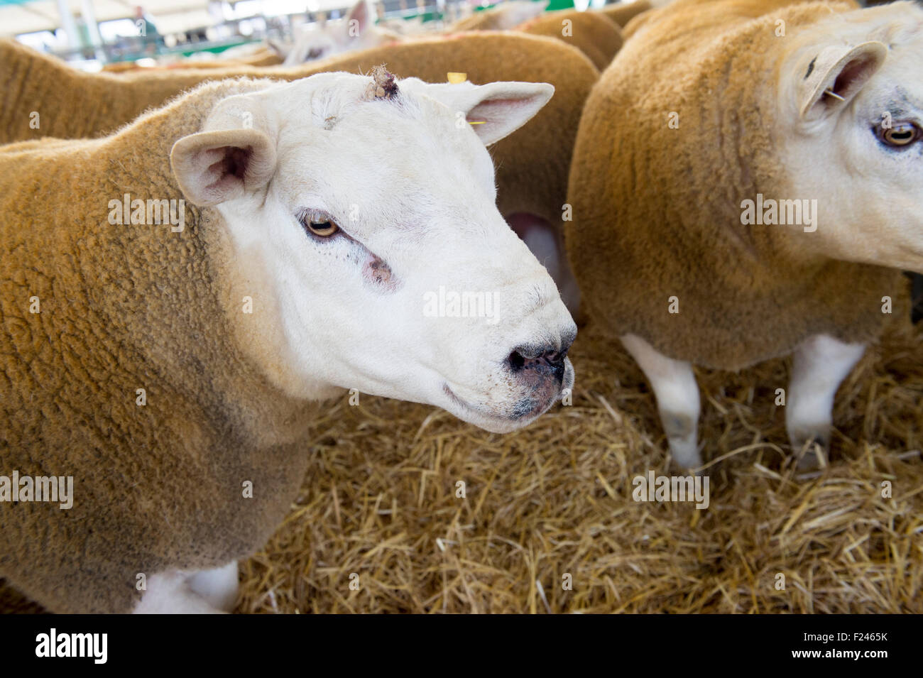 ce6cf6a8 2002 2007 Stock Photos & 2002 2007 Stock Images - Page 3 - Alamy