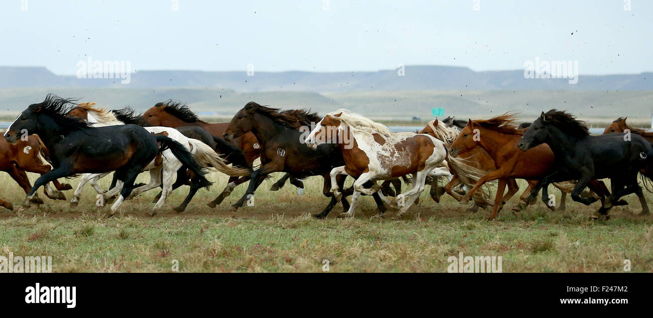 Xilin Gol. 11th Sep, 2015. Horses run at the Phoenix Horse Field in the suburb of Xilin Hot in north China's - Stock Image