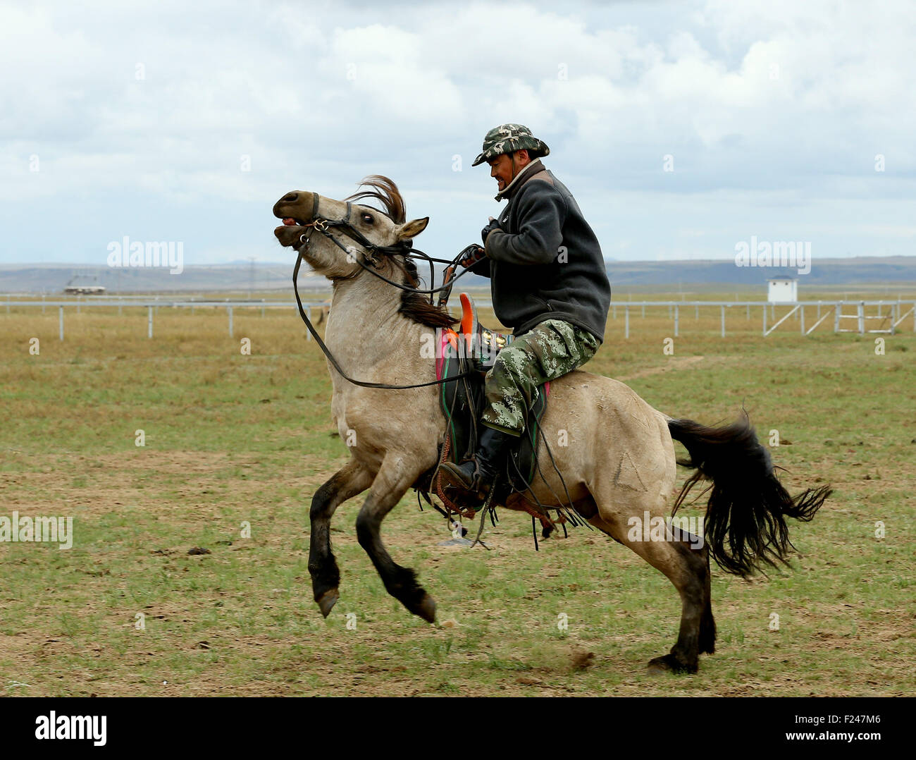 Xilin Gol. 11th Sep, 2015. A Mongolian rider tames a horse at the Phoenix Horse Field in the suburb of Xilin Hot - Stock Image