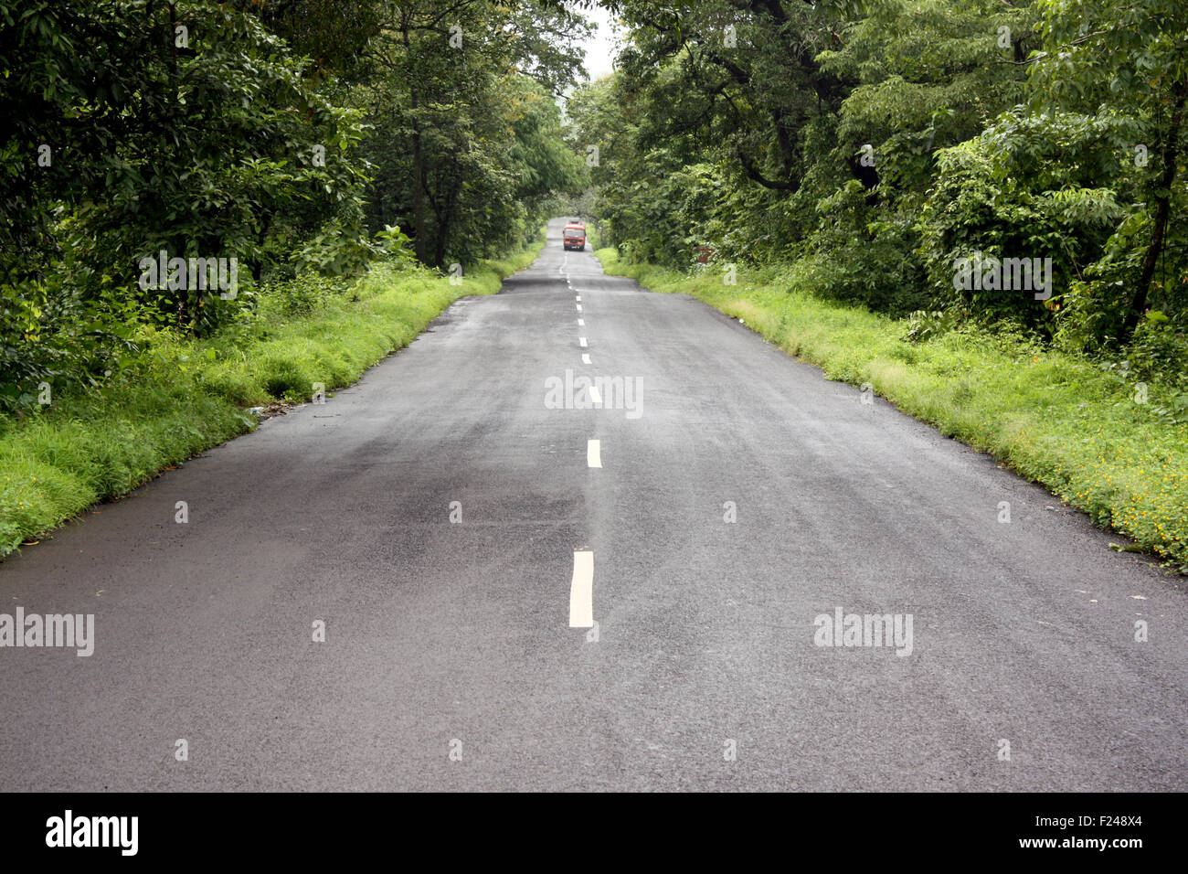 A lone state transport bus traveling through a road in the beautiful jungles of Indi - Stock Image
