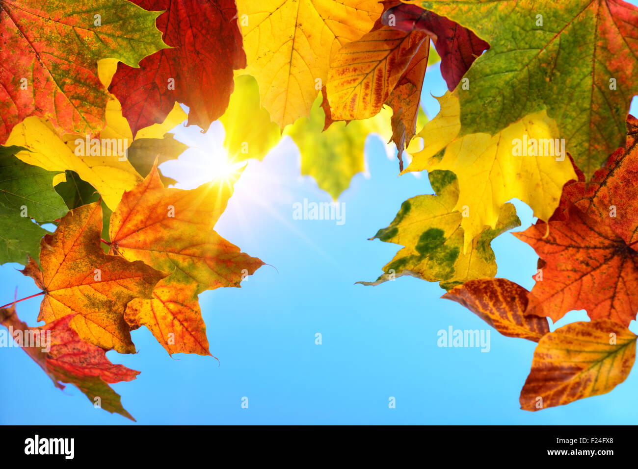 Colourful autumn leaves in the foreground framing the clear blue sky and the sun in the background - Stock Image