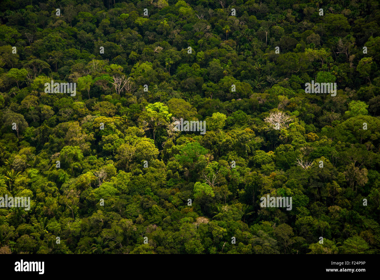 Amazon Rainforest aerial. Primary forest between Iquitos, Peru and Brazilian border - Stock Image
