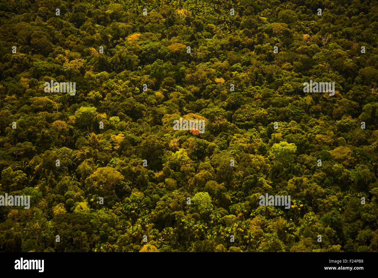 Rainforest aerial, Primary forest, Amazon Region, Peru - Stock Image