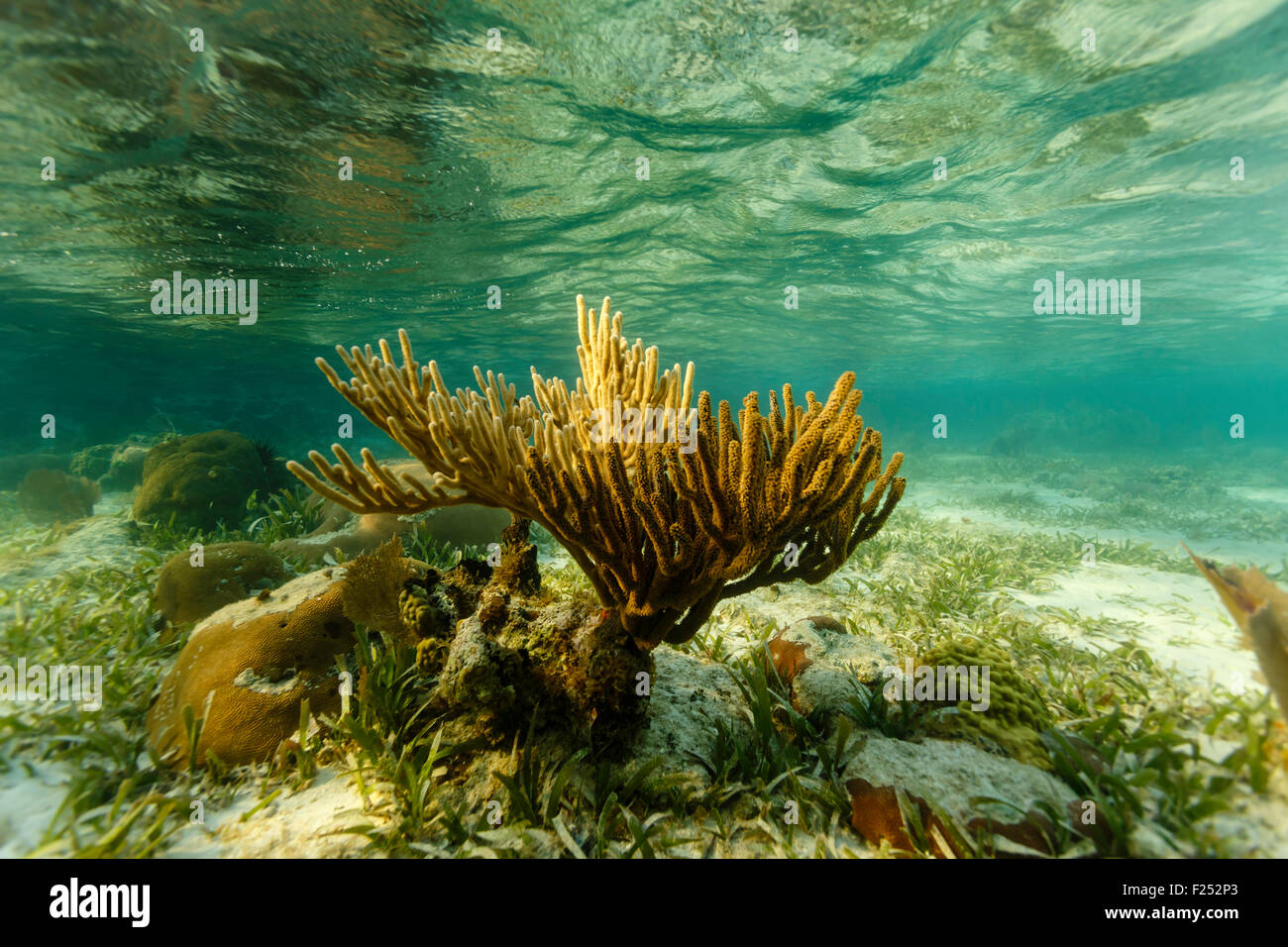 Coral and reflections of water surface - Stock Image