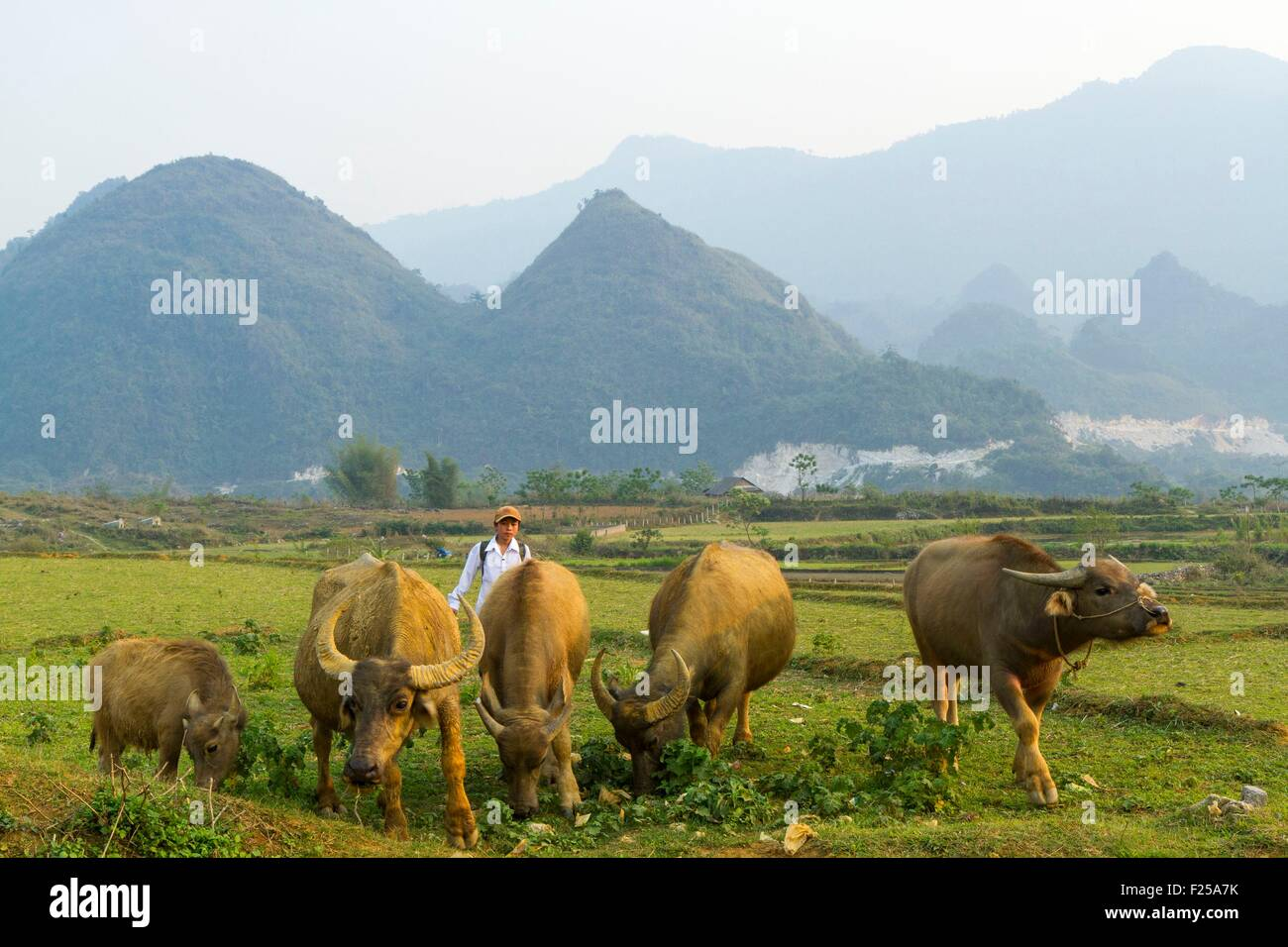 My Lai Vietnam Stock Photos & My Lai Vietnam Stock Images - Alamy