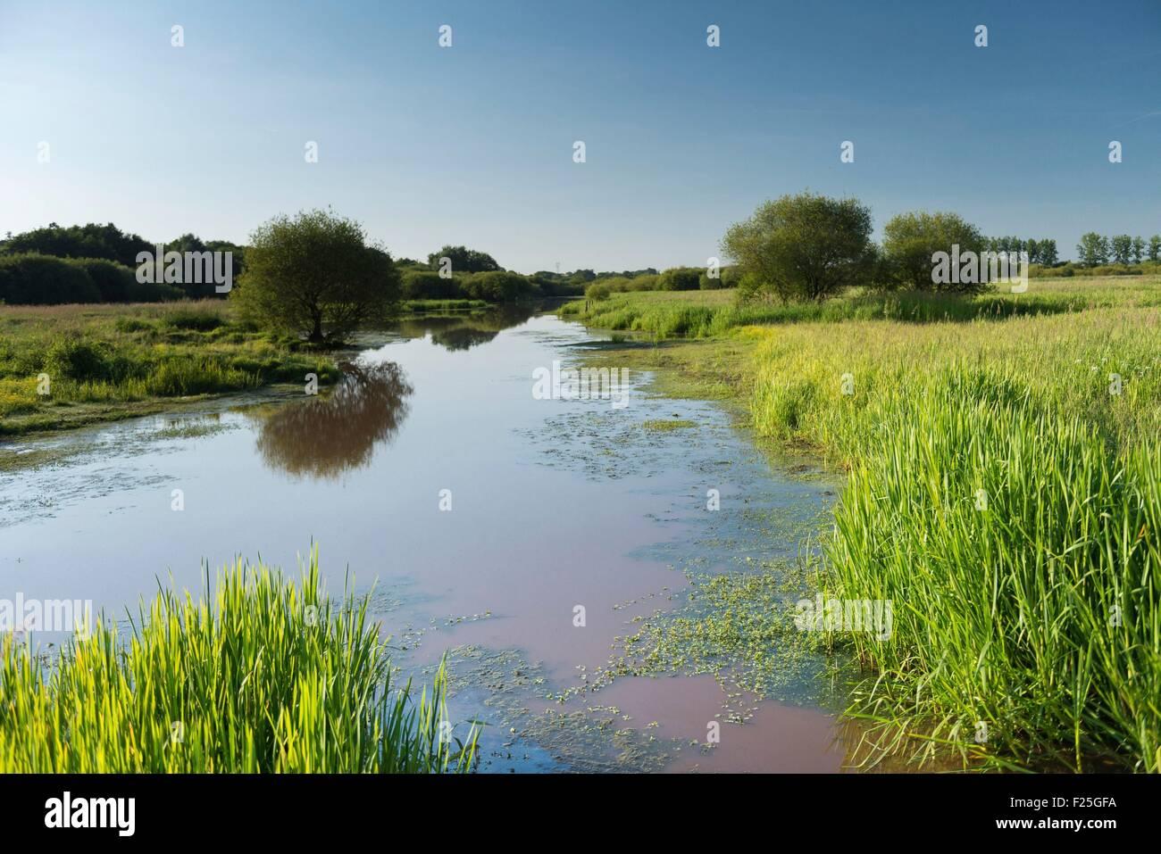 France, Ille et Vilaine, La Chapelle de Brain, marshes of Gannedel - Stock Image