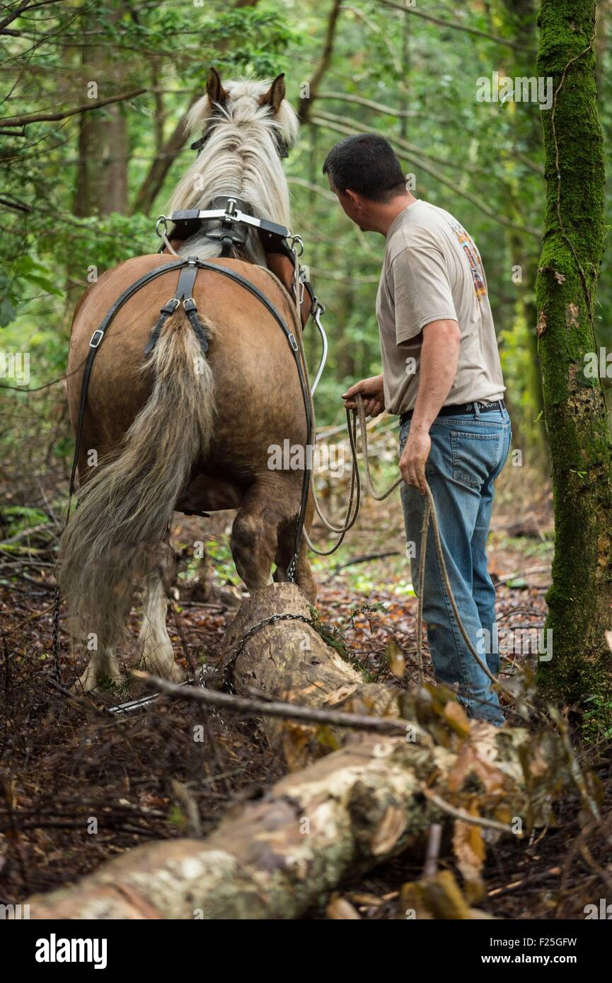 France, Finistere, Plougastel Daoulas, hauling by horse on the natural site of Kererault Stock Photo