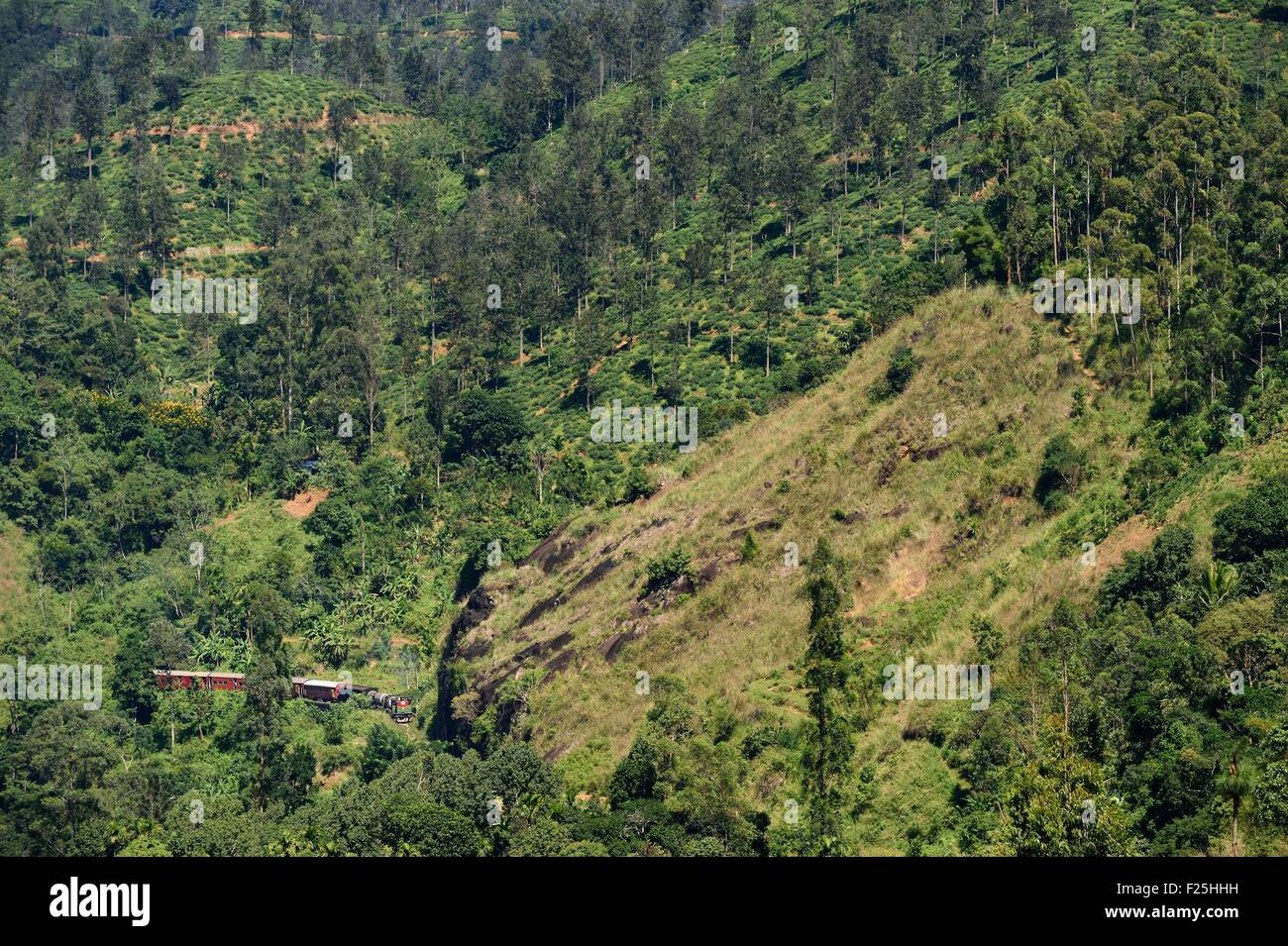 Sri Lanka, Uva Province, train on the railway track that goes through the tea growing hill country next to Ella Stock Photo