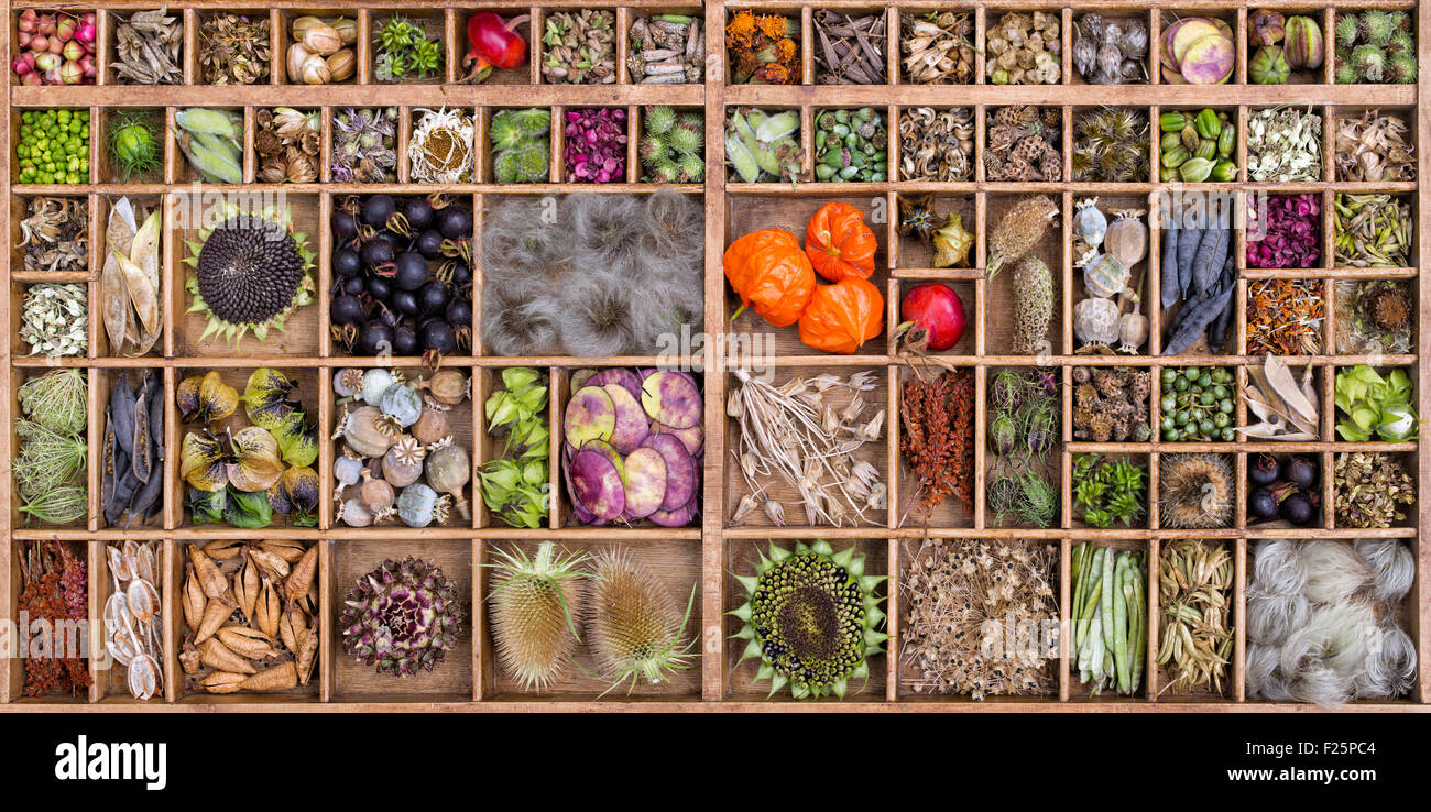 Collection of dried flower seed pods and seeds from the garden - Stock Image