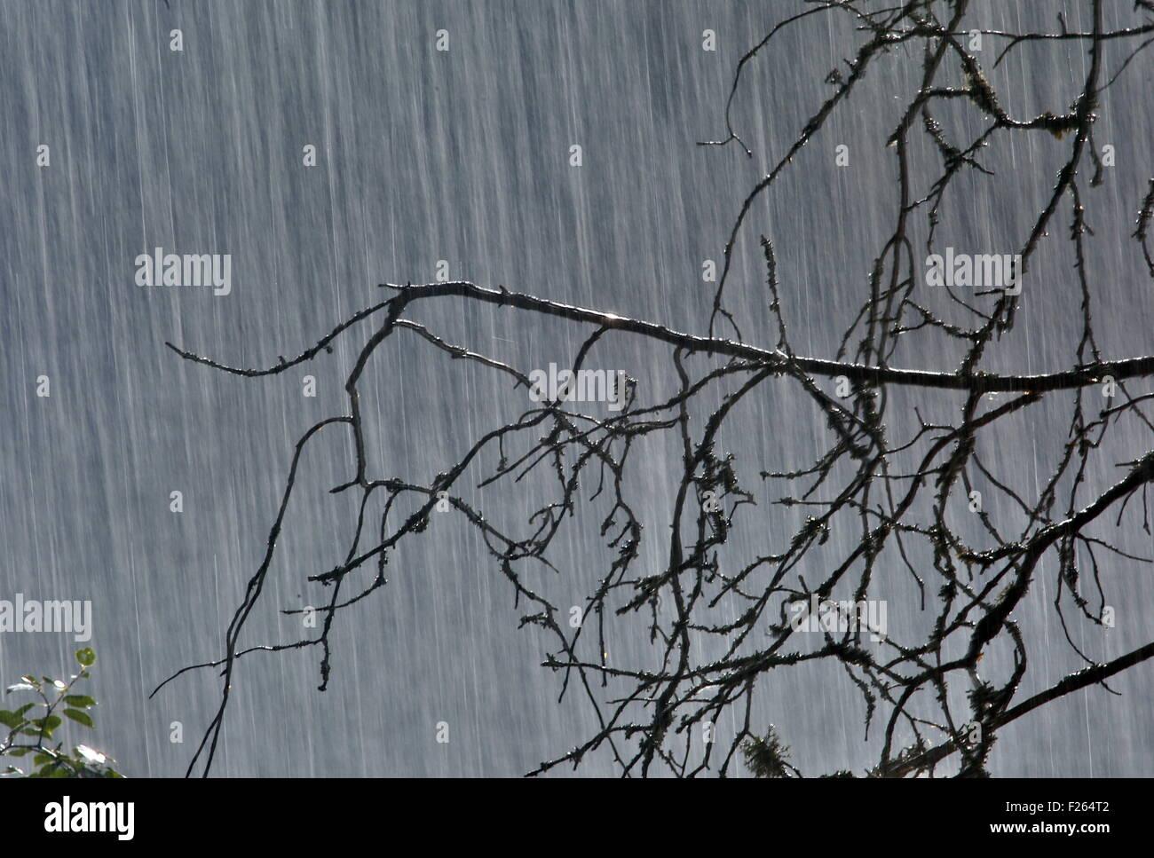 Savonlinna, Finland. 30th July, 2015. Rain falling in a forest. © Valery Matytsin/TASS/Alamy Live News - Stock Image