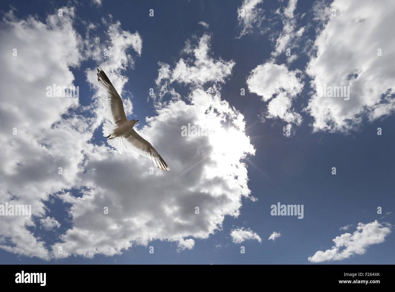 Helsinki, Finland. 1st Aug, 2015. A seagull . © Valery Matytsin/TASS/Alamy Live News - Stock Image