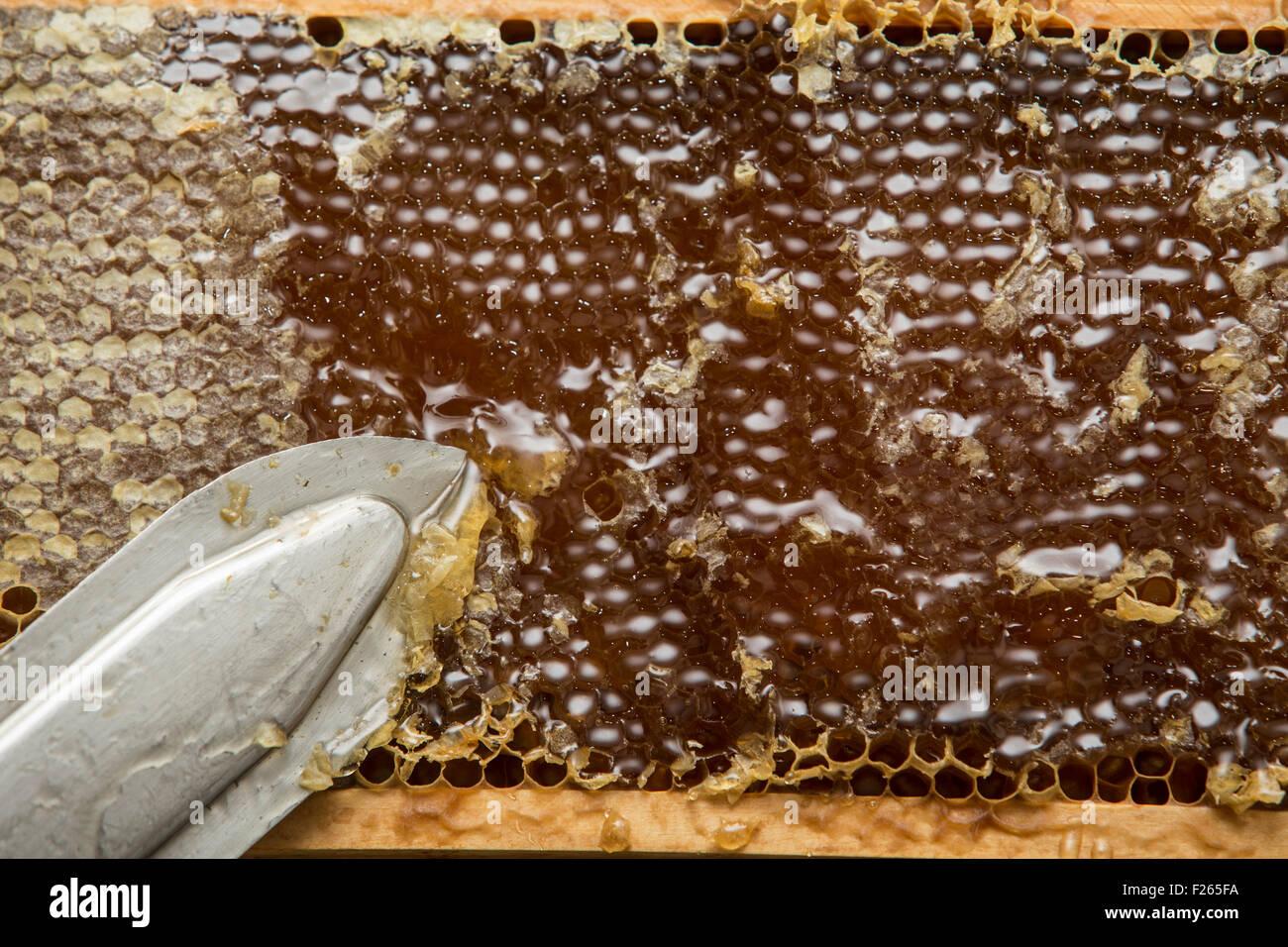 beekeeper removed beeswax - Stock Image