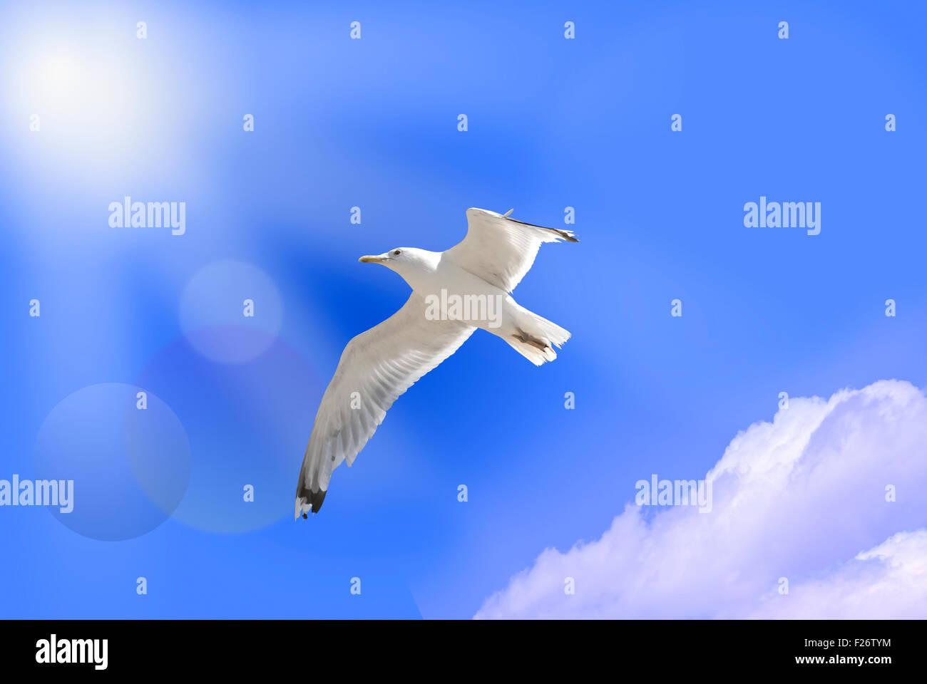 white bird of paradise on blue sky - Stock Image