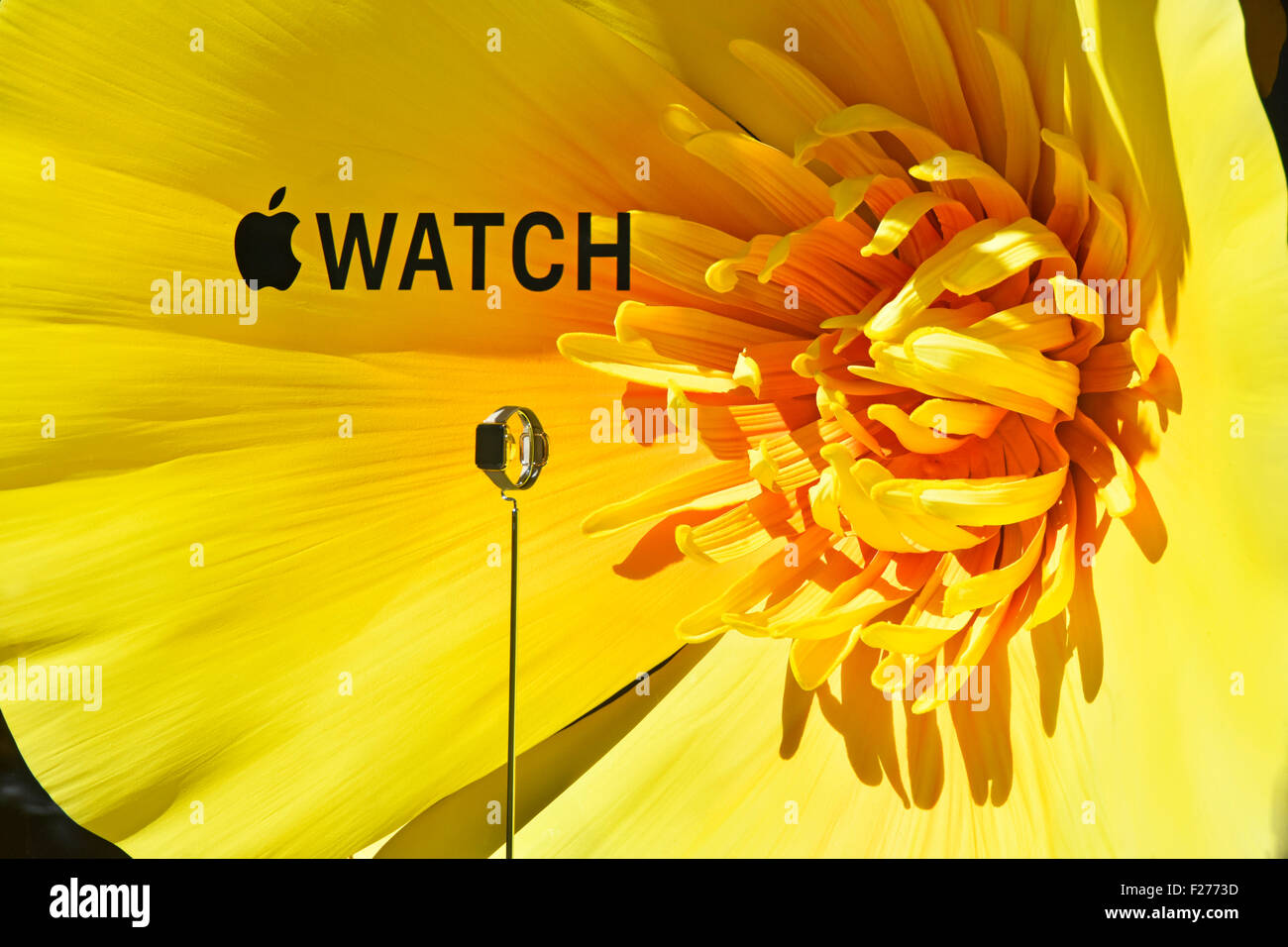 Selfridges department store promotion window display for Apple Watch theming on background of large colourful flowers - Stock Image