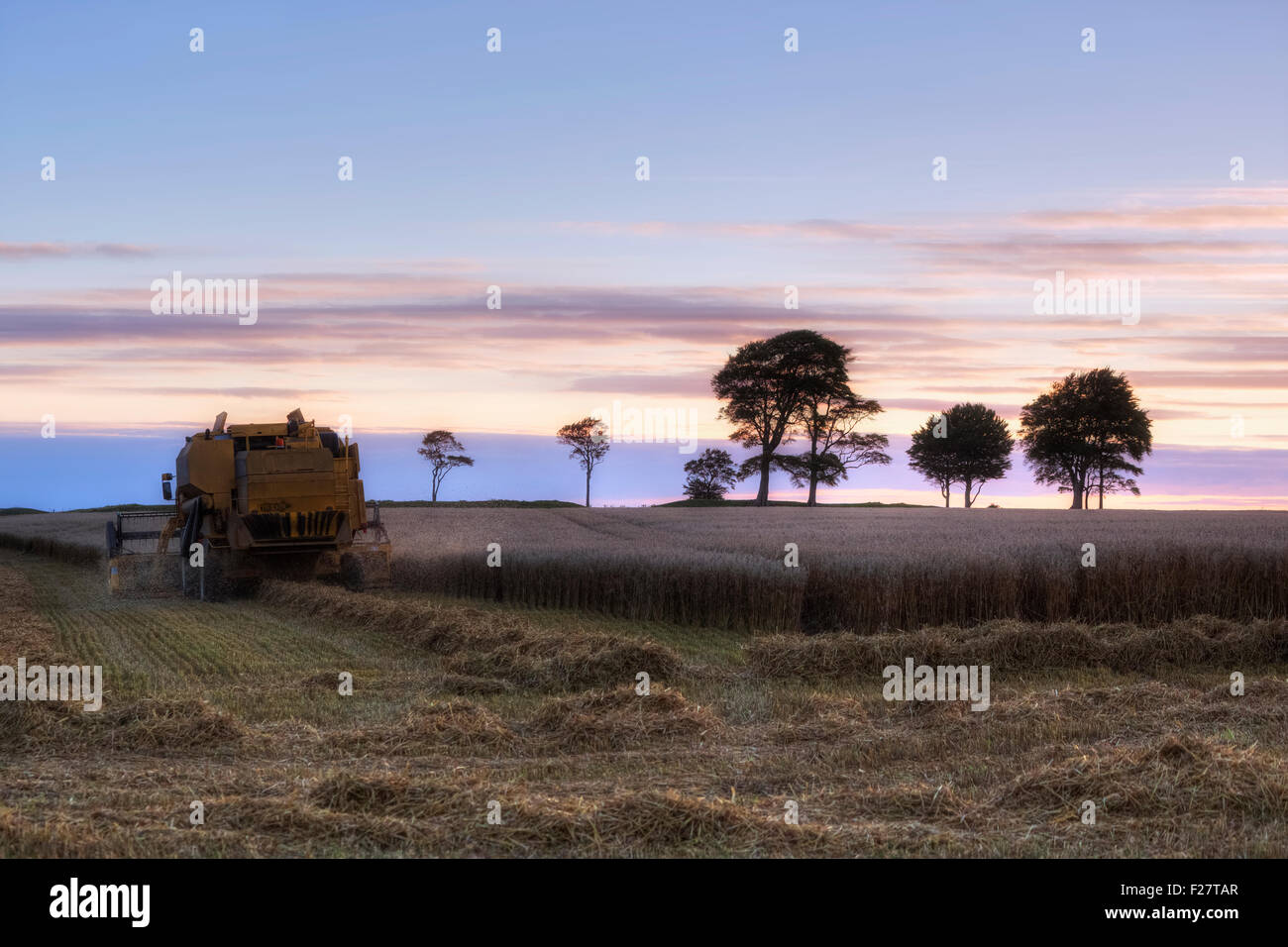 harvest in late summer in South West England - Stock Image