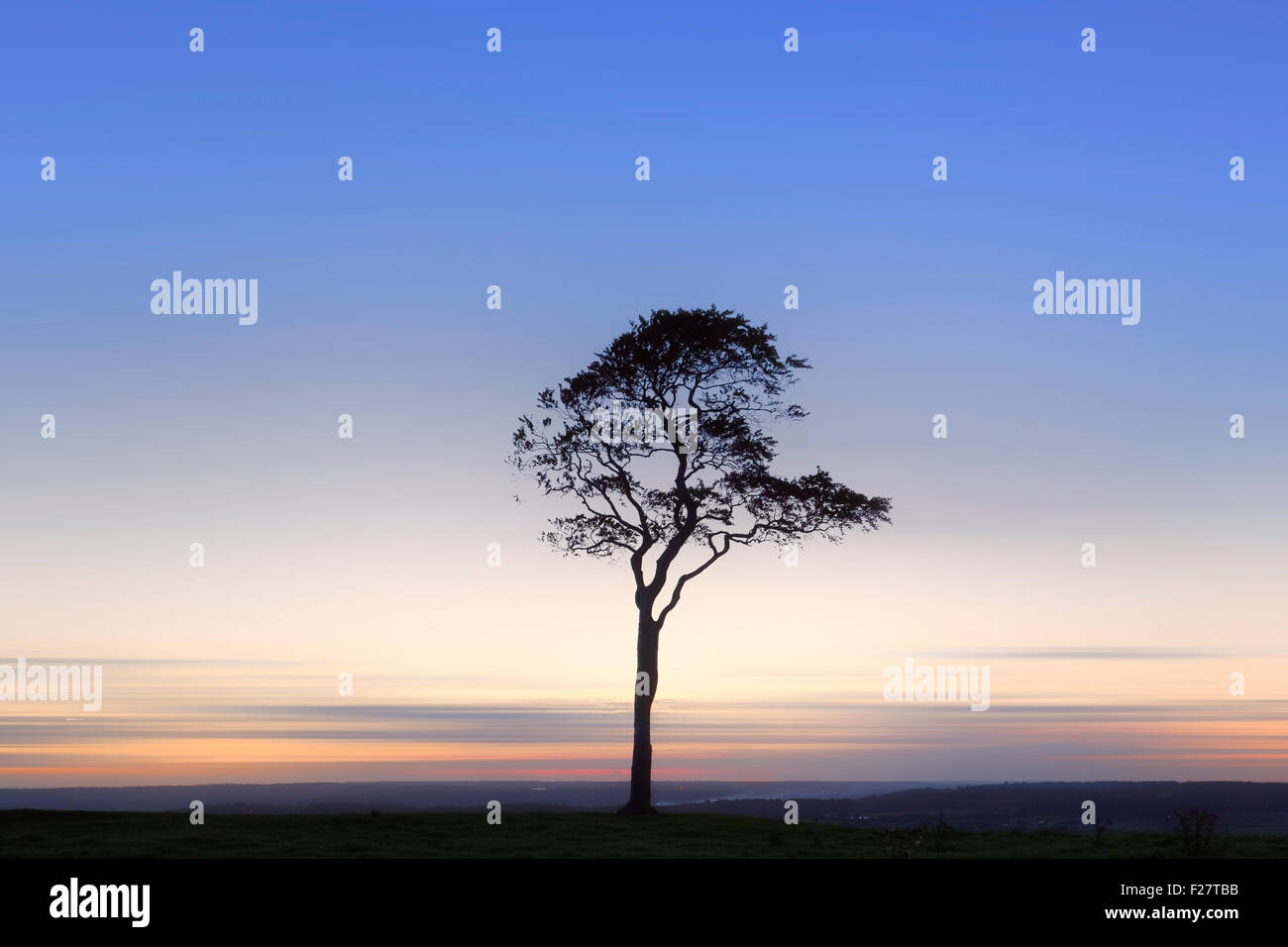 tree in sunset on Roundway Hill, Devizes, Wiltshire, England, UK - Stock Image
