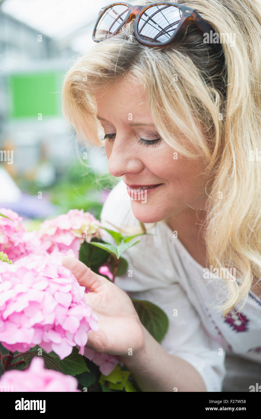 Mature Woman Smelling Hydrangea Flowers In Garden Centre Augsburg