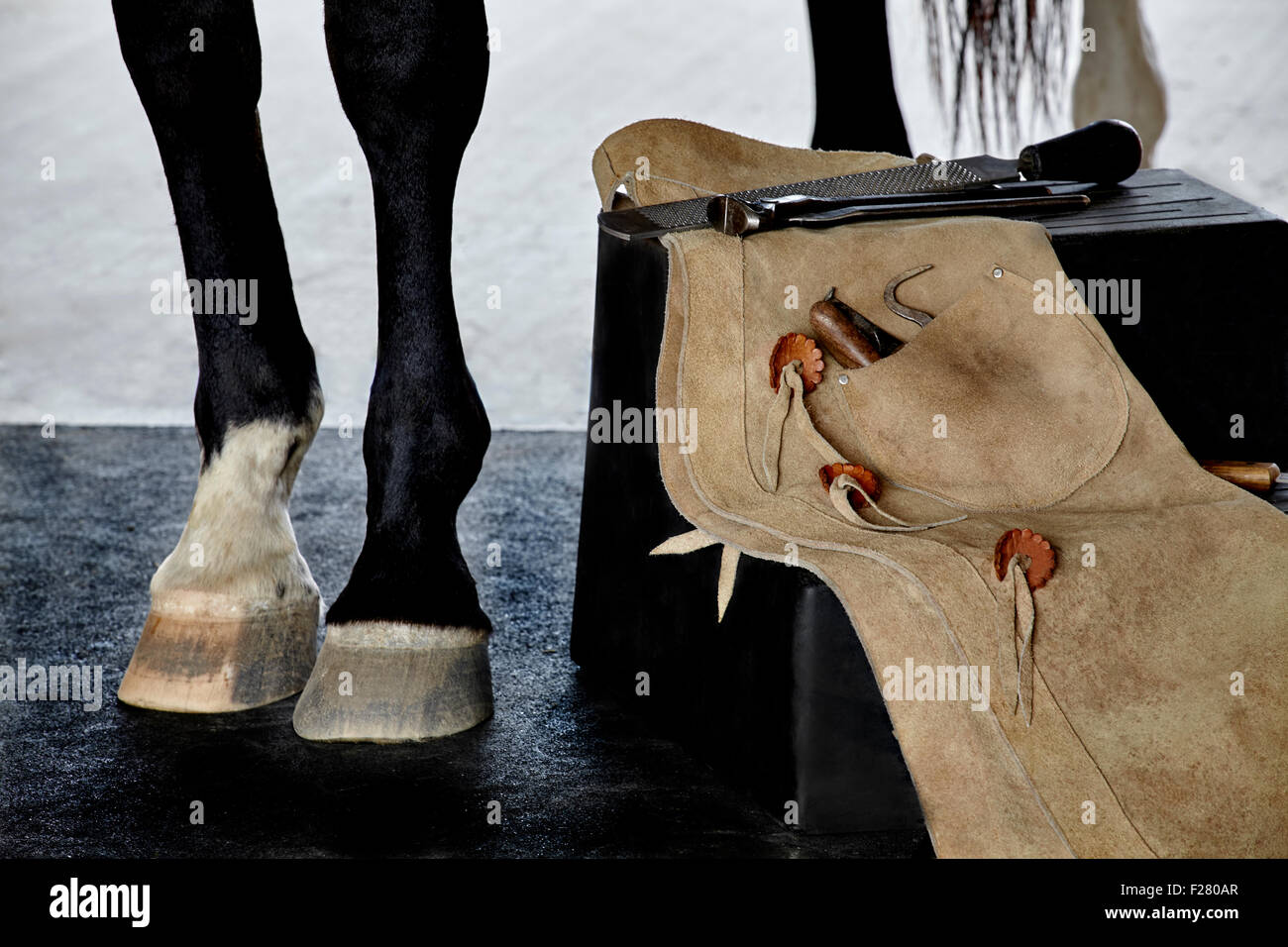 VARIETY OF 8 COLO VINYL HOOF PICK WITH STAINLESS STEEL  PICK HORSE HOOF PICK