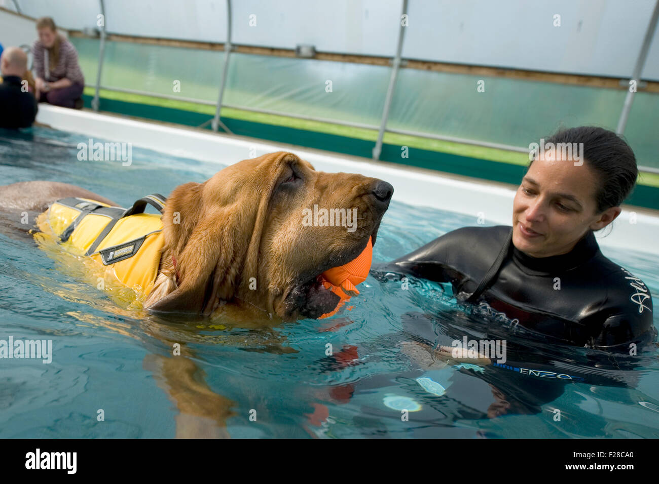 dog hydrotherapy - Stock Image