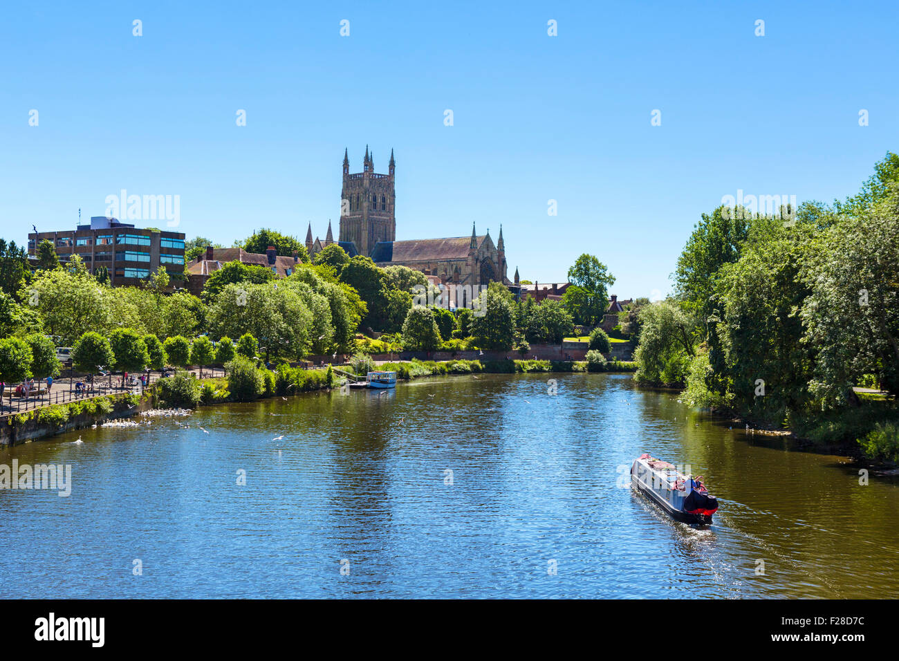 Narrowboat on the River Severn in front of Worcester Cathedral, viewed from Worcester Bridge, Worcester, England, - Stock Image