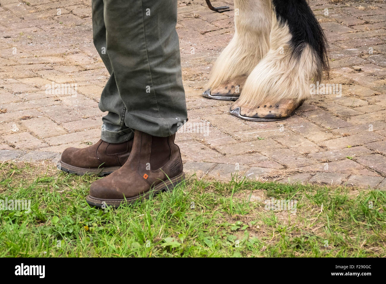 A man standing next to a Shire Horse at the Essex Country Show, Barleylands, Essex. - Stock Image