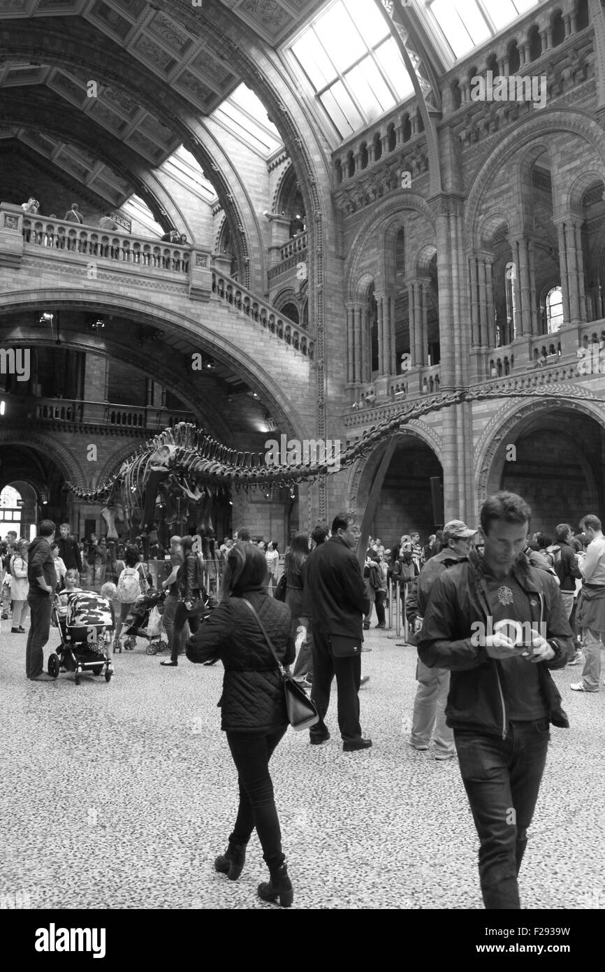 Black and white busy central hall of The Natural History Museum, London, England. Large dinosaur skeleton fills - Stock Image