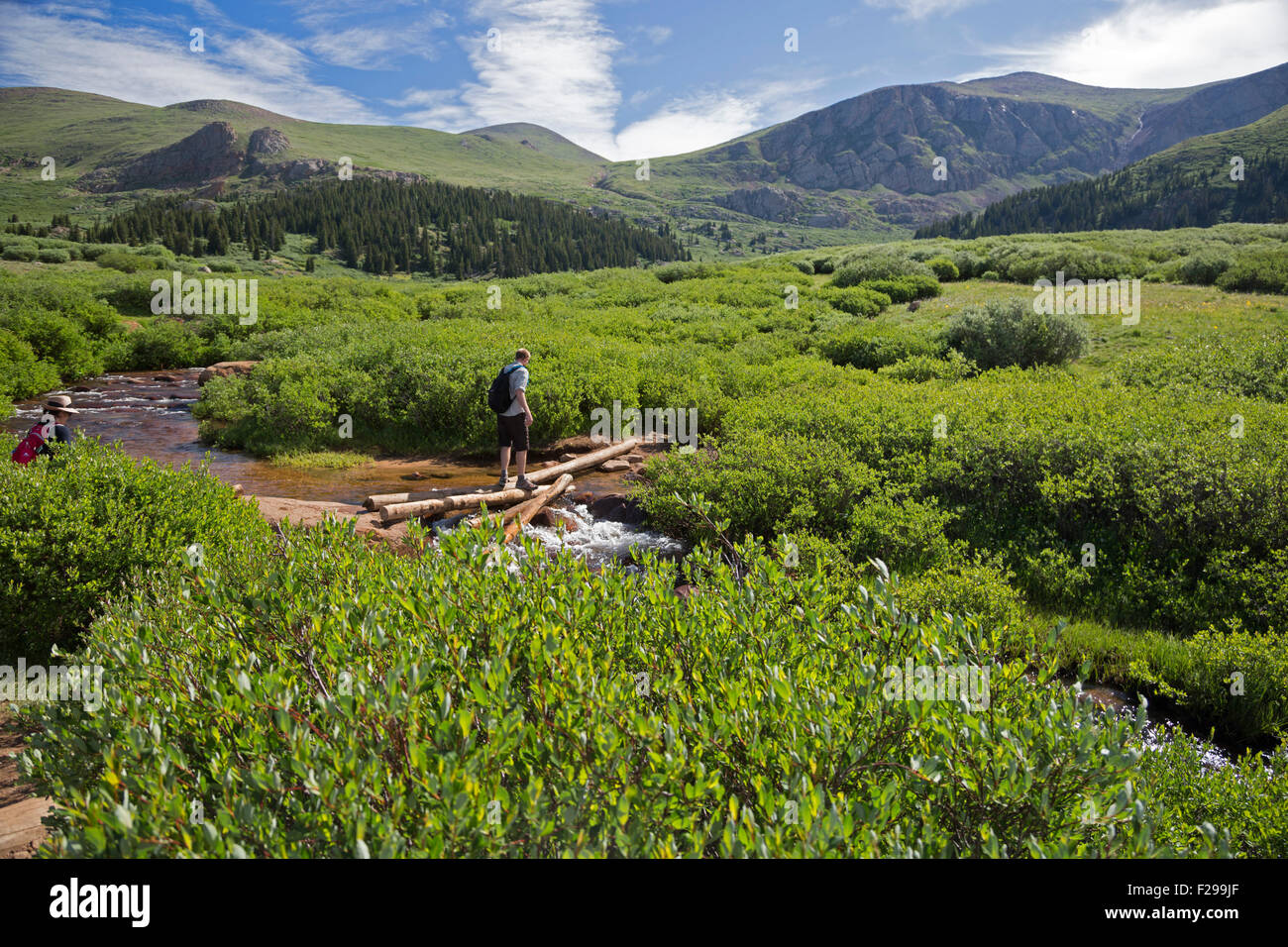 Georgetown, Colorado - A hiker balances on logs while crossing a stream on the trail from Guanella Pass to Mt. Bierstadt. - Stock Image