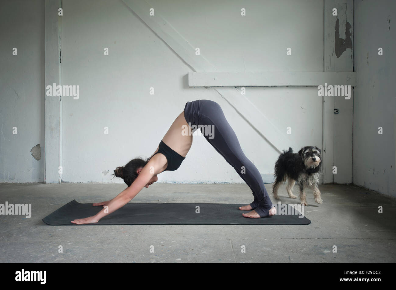 Mid adult woman practicing downward facing dog pose in yoga studio, Munich, Bavaria, Germany - Stock Image