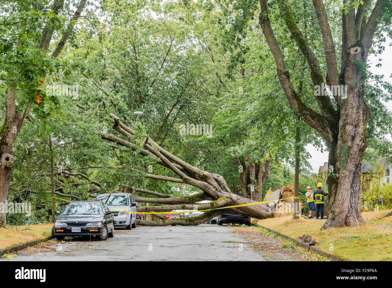 Powerful storm winds knock over trees and cause widespread power disruptions, Vancouver, British Columbia, Canada - Stock Image