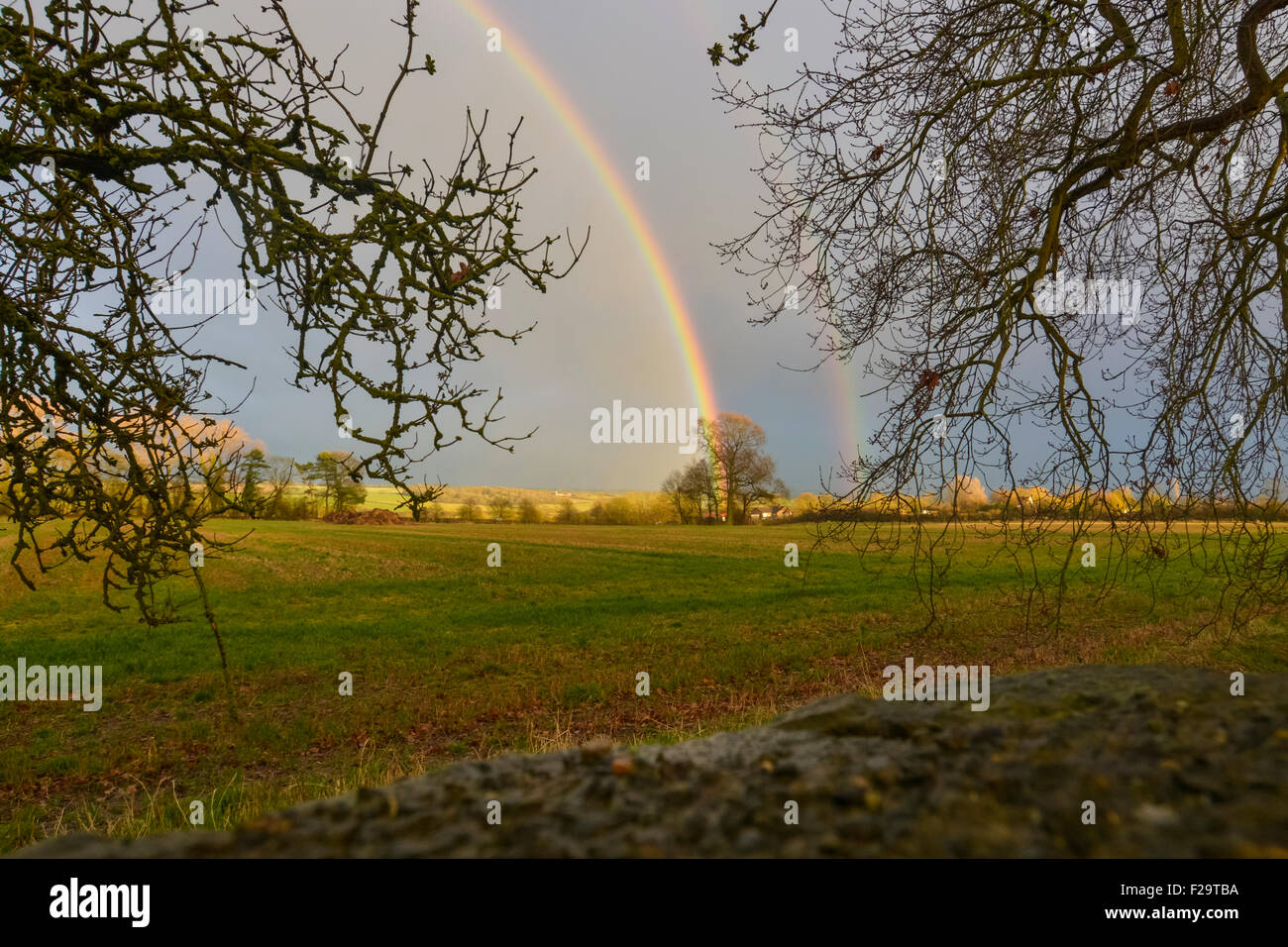 A tree at the end of the rainbow - Stock Image