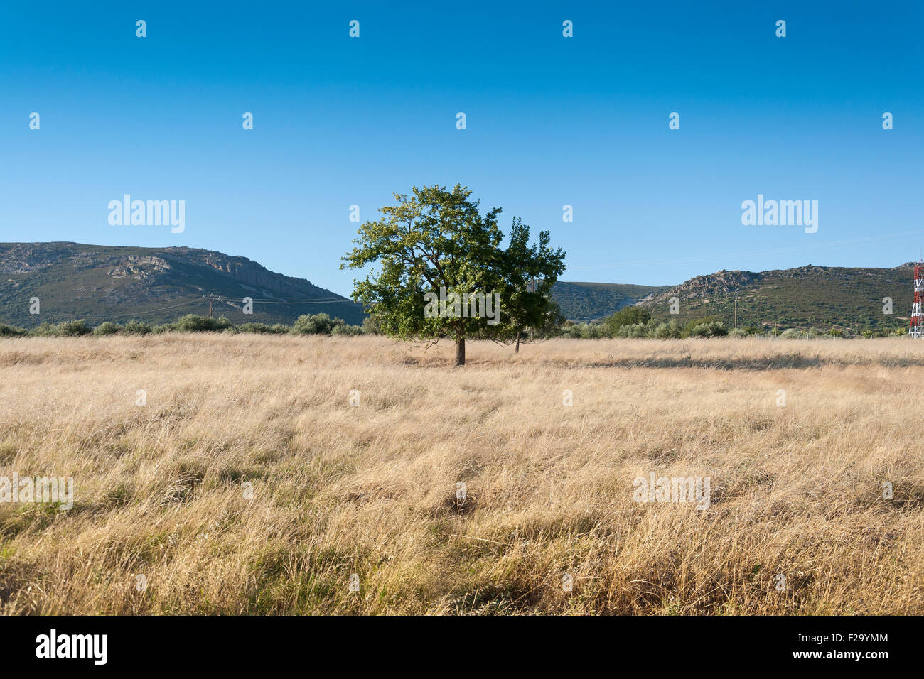 Tree in an agrarian landscape in Ciudad Real Province, Spain - Stock Image
