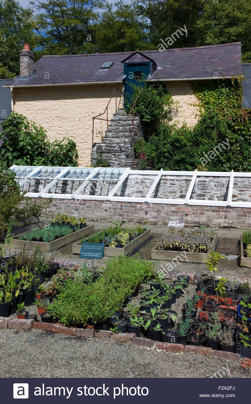 Cold Frames In The Kitchen Garden Nursery At Llanerchaeron National