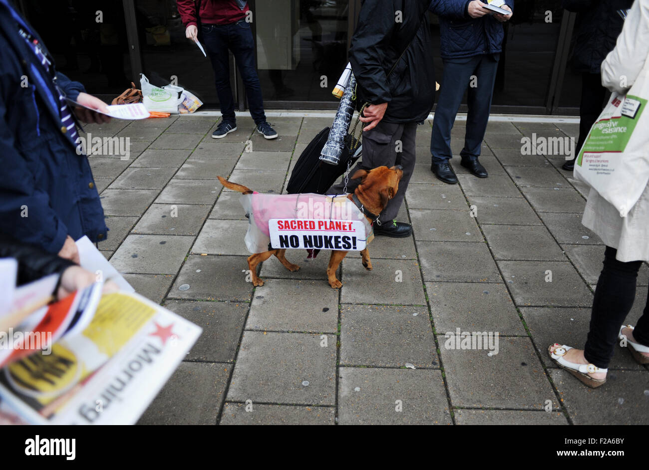 Brighton, UK. 15th September, 2015. An anti nuclear weapon protester with his dog wearing a protest message outside - Stock Image