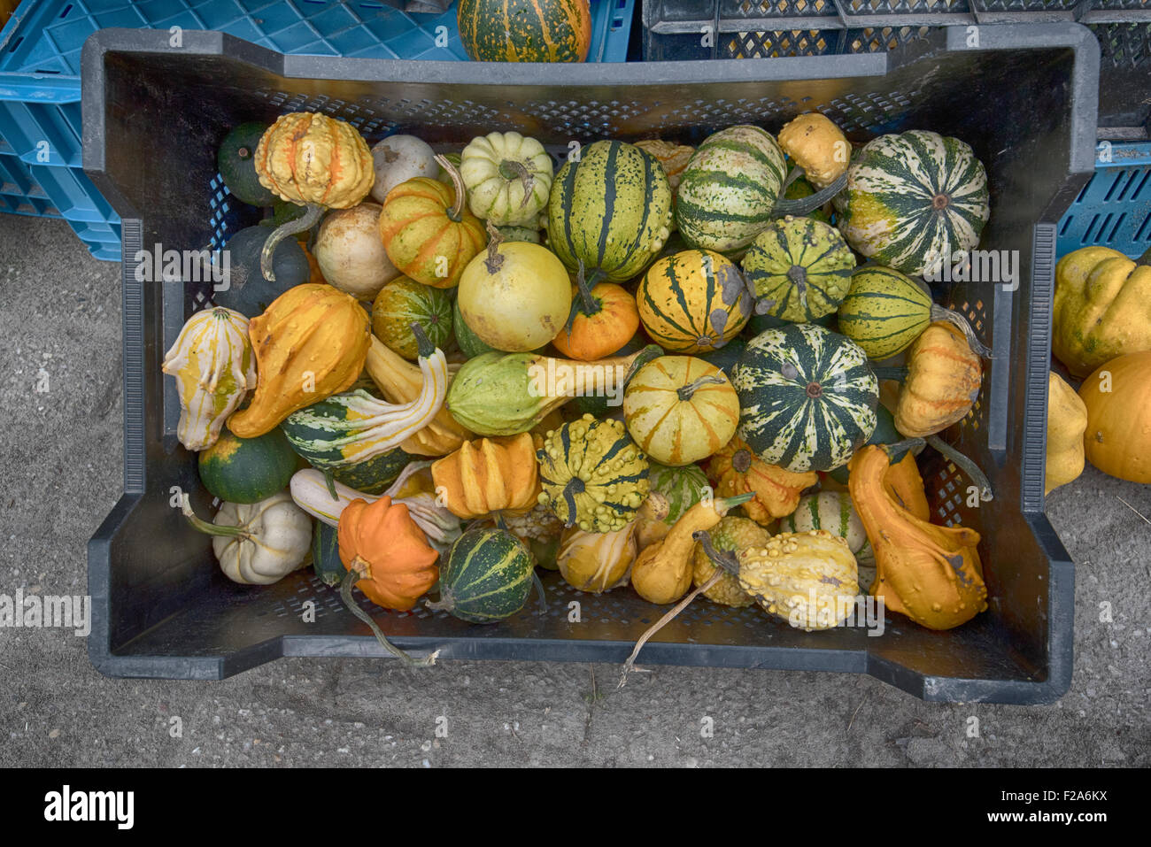 pumpkins and squash for sale - Stock Image