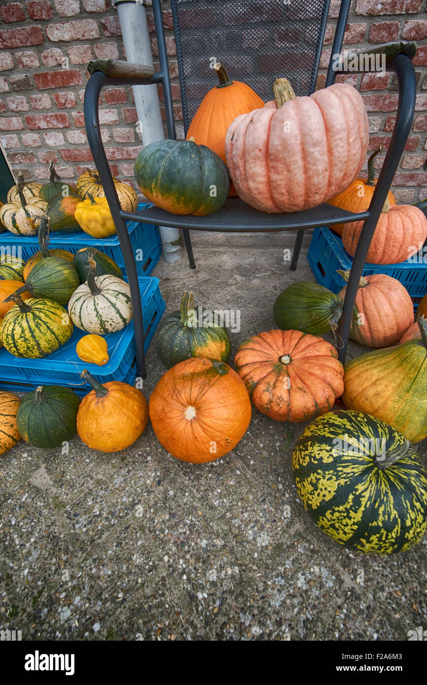 pumpkins and squash for sale Stock Photo