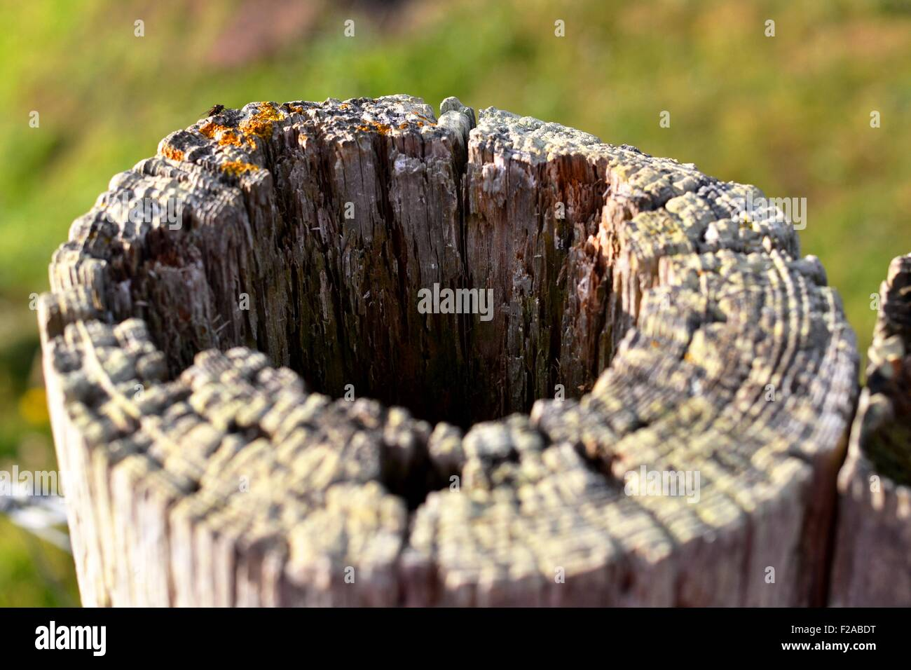 wooden fence post - Stock Image