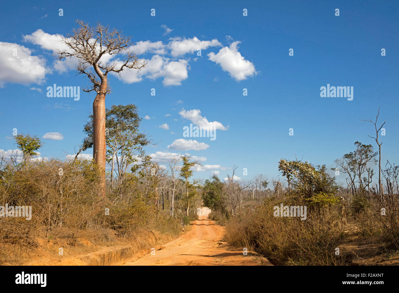 Dirt road from Belon'i Tsiribihina / Belo sur Tsiribihina / Belo - Tsiribihina to Morondava, Menabe, Madagascar, - Stock Image