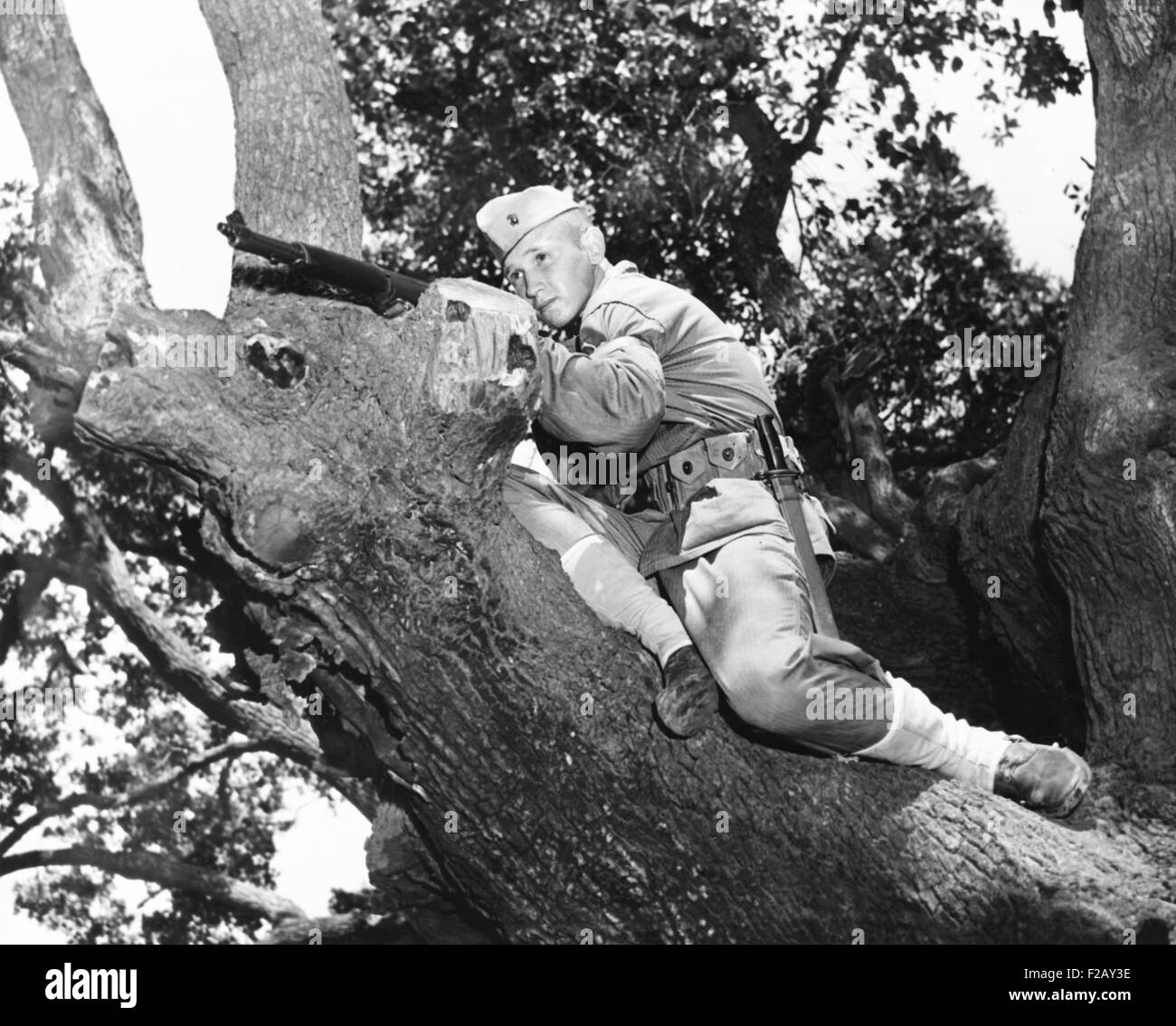 Stephen P. Hopkins, son of Harry Hopkins, in basic training at Parris Island. He is in a tree with his M-1 rifle. - Stock Image