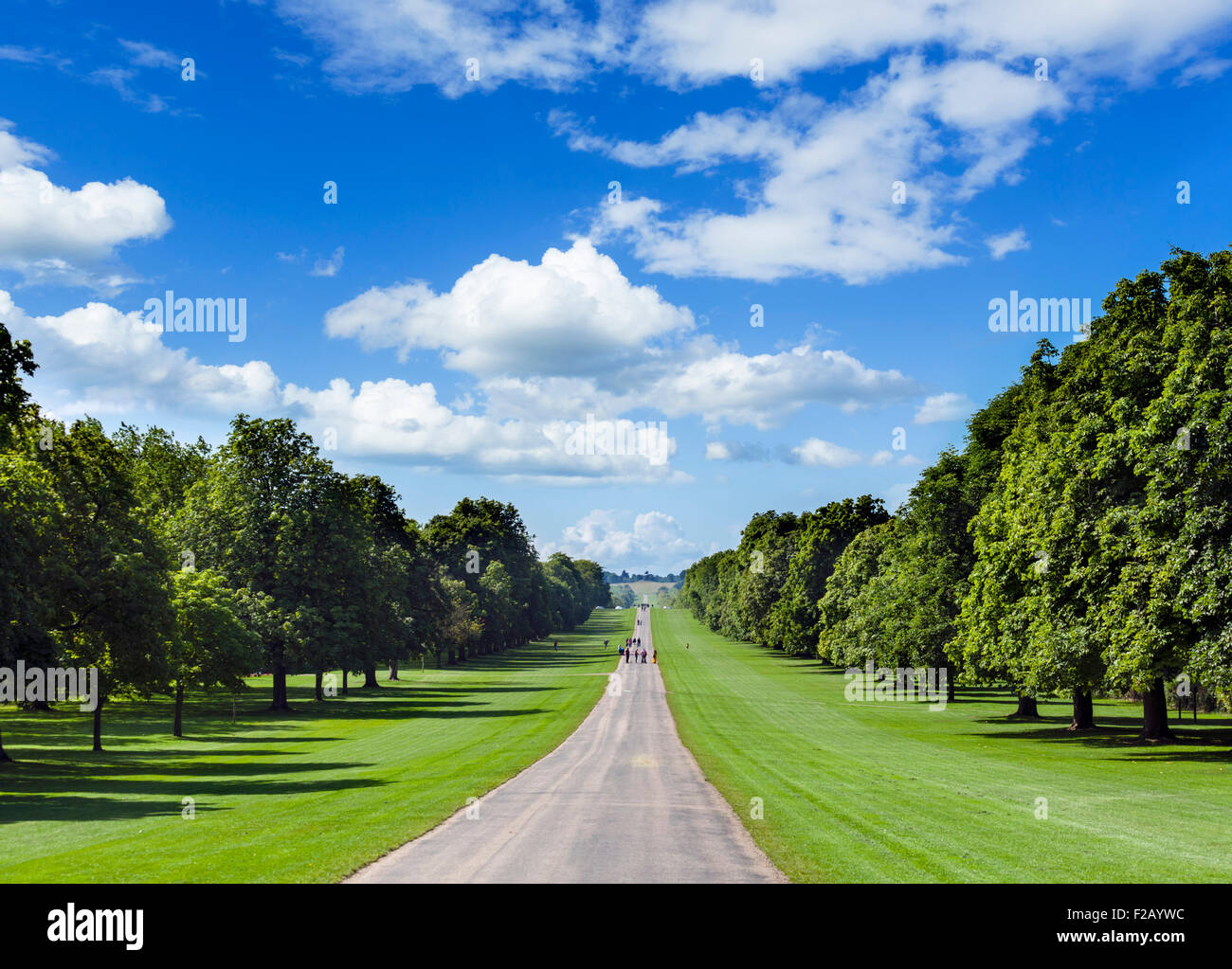 The Long Walk looking south, Windsor Great Park, Berkshire, England, UK - Stock Image