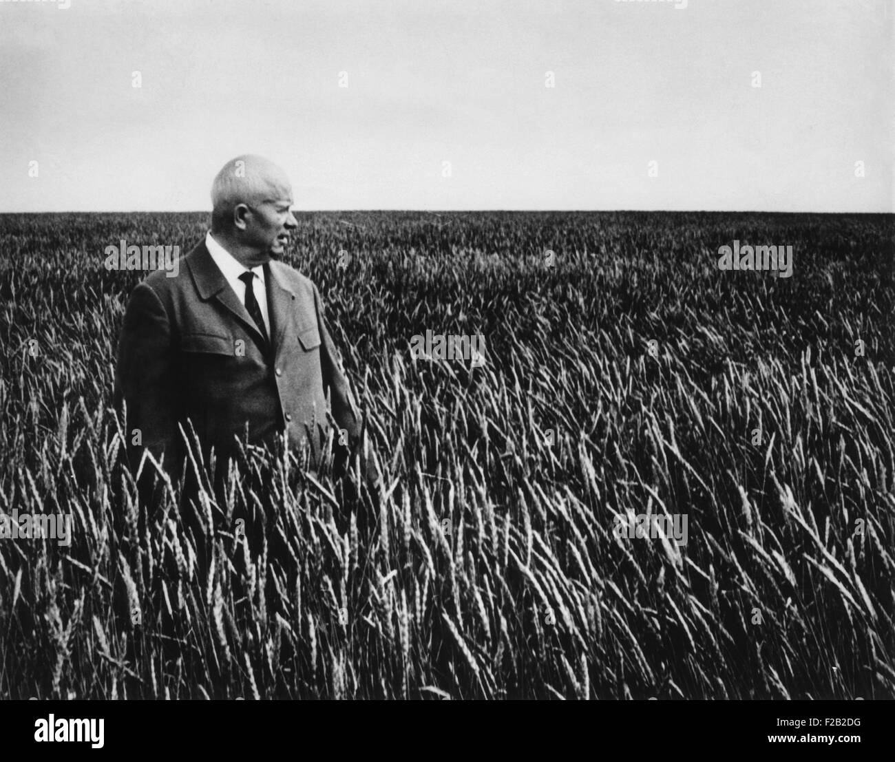 Soviet Premier Nikita Khrushchev stands in a sea of waving wheat in Kazakhstan. Sept. 1964. A month later the Presidium, - Stock Image
