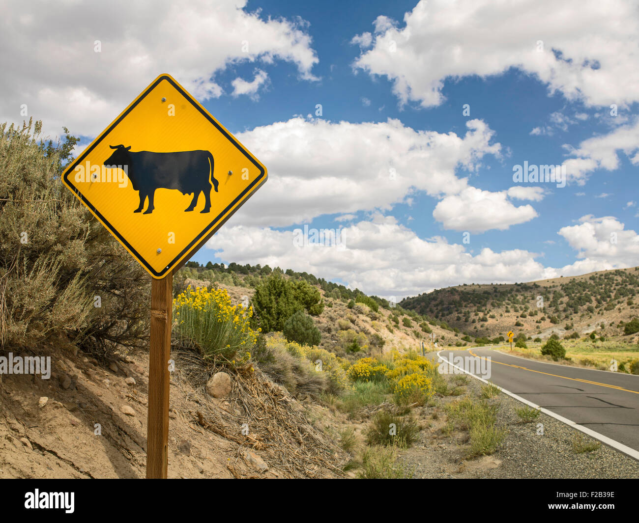 Cow warning sign on Highway 278, to Bodie Ghost Town, Mono County, California, USA - Stock Image