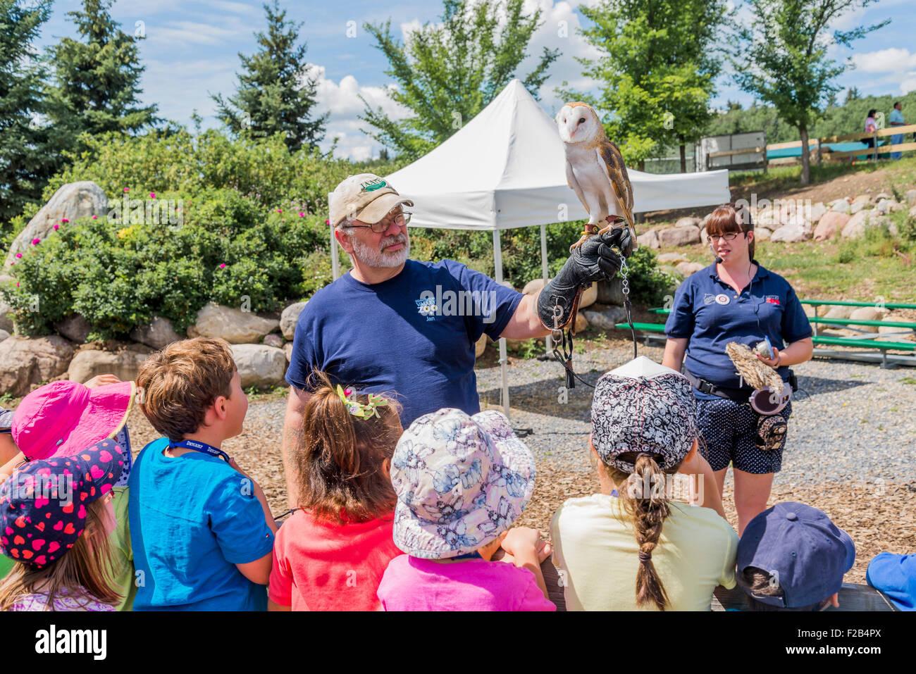 Barn owl interpretive talk, , Edmonton Valley Zoo, Edmonton, Alberta, Canada - Stock Image