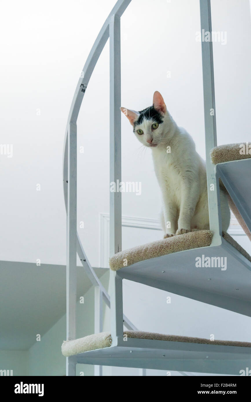 Cat on stairs - Stock Image
