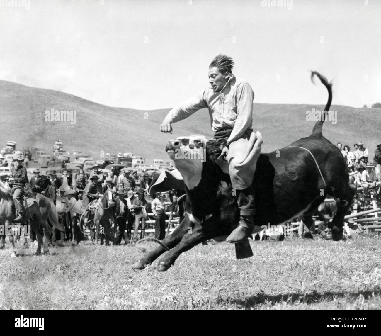 Bull Rider at American Rodeo. Ca. 1950. - (BSLOC_2014_17_112) - Stock Image