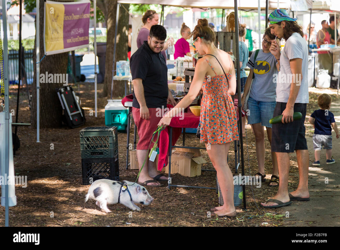 Teacup Pig Stock Photos & Teacup Pig Stock Images - Alamy